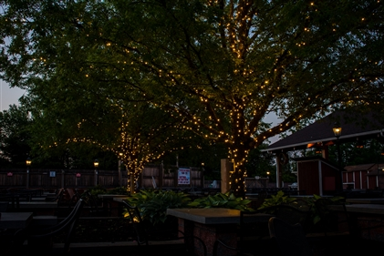 View larger photo of: Commercial tree wrap lighting restaurant NJ