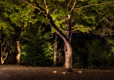 View larger photo of: Uplighting landscape light Jersey Shore