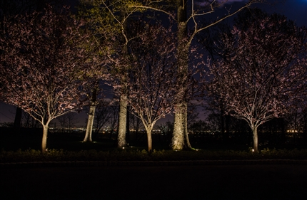 View larger photo of: Outdoor tree lighting NYC