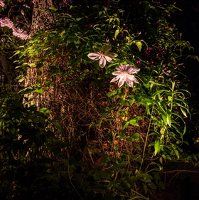 View larger photo of: Flower garden lighting