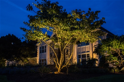 View larger photo of: Far Hills NJ Uplighting tree lights