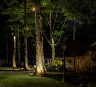 View larger photo of: Tree uplighting New Jersey