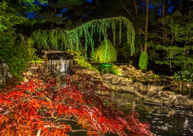 View larger photo of: koi pond lights